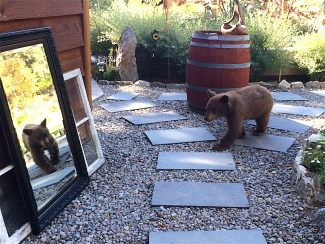 Being bear aware at Lake Tahoe important for Labor Day weekend