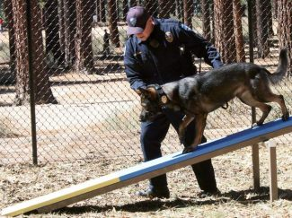 Officer Matt Morrison and K9 Quatro show how to use the equipment at Bijou Dog Agility Park on Sunday.