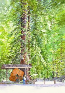 """Carol Riddle's """"Henry Cowell Redwoods"""" is shown. Riddle's work is among that which will be displayed at upcoming fine arts festivals at Lake Tahoe."""