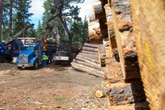 A crew loads logs from the South Shore Fuels Reduction Project near Fallen Leaf Lake Wednesday.