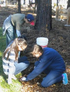 Club Live members plant flower bulbs Oct. 26 during a Make a Difference Day at South Tahoe Middle School.