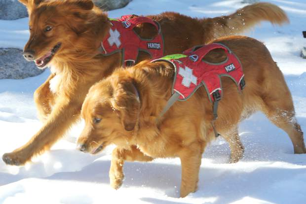 Sierra-at-Tahoe avalanche dogs Kopa, front, and Hunter, back, join in the opening day fun.