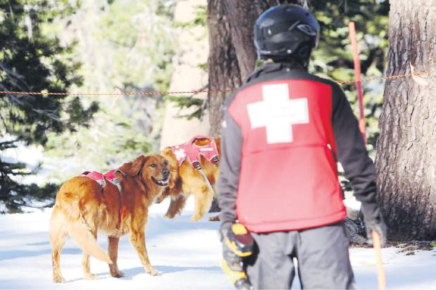 Avalanche dog Kopa hangs out at the top of the Nob Hill lift at Sierra-at-Tahoe on opening day, Friday, Nov. 20.