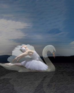 """Swan Lake at the Lake"" takes the stage at Sand Harbor State Park Monday."