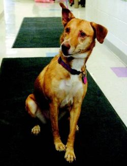 Emma Garrard / Tribune News Service /  Brandy, a dog at Pet Network, returned home Friday, after her owners identified him on the Web.