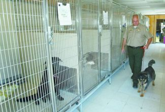 Jim Grant / Tahoe Daily Tribune /  El Dorado County Animal Control supervisor Robert Gerat removes a dog from the temporary kennels that are housed in a trailer.