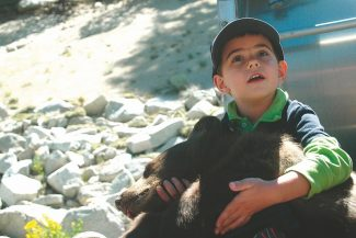 Axie Navas/Tahoe Daily TribuneSean Callahan, 5,  holds a 5-month-old sedated bear cub in his lap. The Nevada Department of Wildlife trapped the bear and its mother in Tahoe Village on Wednesday and tagged the cub before releasing the animals the next day.