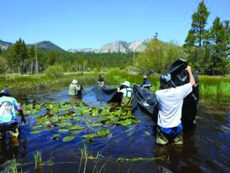 League to Save Lake TahoeVolunteers help remove milfoil and install bottom barriers in a swale next to Baldwin Beach on June 3.