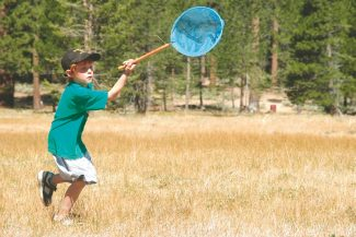 Axie Navas / Tahoe Daily TribuneWill Rich, 7, chases after grasshoppers in a meadow at the Bijou Community Park on Tuesday.