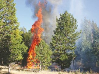 Courtesy of John CocoresSouth Lake Tahoe resident John Cocores took this photo of a fire off West Way on Sunday. The blaze grew to about one-quarter acre before firefighters were able to contain it.
