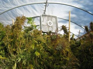 Alpine County Sheriff's OfficeA fan used to circulate air inside a hoop house containing pot plants found in Markleeville on Tuesday morning.