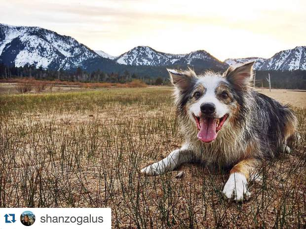 Best friend. Submitted using #TahoeSnaps.