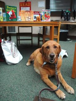 Young readers can read to Rosie at the South Lake Tahoe Branch Library next Wednesday. Axie Navas / Tahoe Daily Tribune