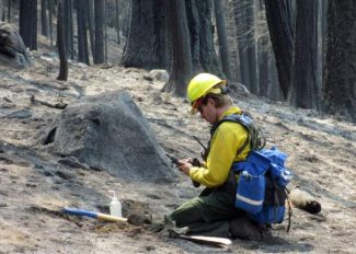In this September 2013 photo provided by the U.S. Forest Service, a soils scientist from the Burned Area Emergency Response team assesses a burn area in the Rim Fire near Yosemite National Park, Calif.