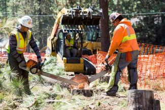 Workers cut down trees near Lakeview Commons as part of the Harrison Avenue project Tuesday in South Lake Tahoe. On Thursday, crews will drive a pulverizer down Harrison to grind out the old roadway.