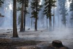 CORRECTS LOCATION OF FIRE SOUTH LAKE TAHOE, CALIFORNIA  - Strong winds blow smoke through the trees during the Emerald Fire along Highway 89, Friday, Oct. 14, 2016 on the southwest shores of Lake Tahoe. The blaze that burned about 200 acres northwest of South Lake Tahoe, California was one of three wind-whipped wildfires burning along the Sierra Nevada. The largest one destroyed more than 20 homes in a rural valley between Carson City and Reno, Nevada. (Randall Benton/The Sacramento Bee via AP)