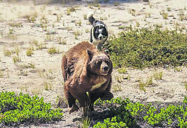Stay Bear Aware During Winter In The Lake Tahoe Region