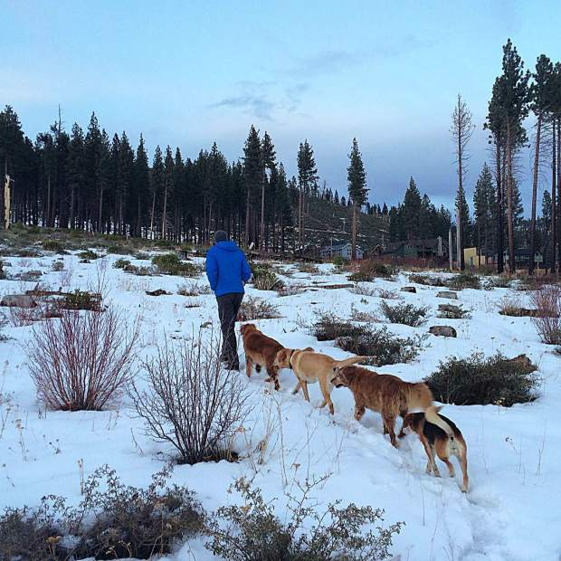 Dog train #afterworkwalks #tahoesnaps