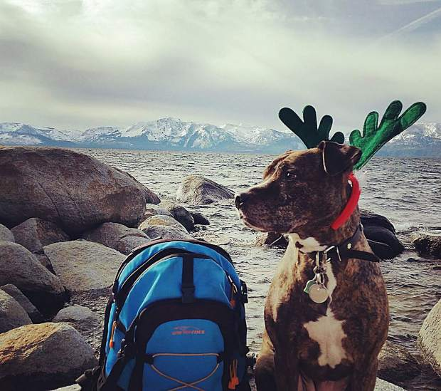 Jill's ready for the holidays! Are you? #getoutside #reindeerpups #happyholidays #tahoesnaps