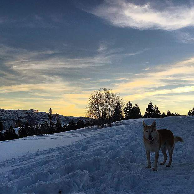 As the sun sets, #montanadawg gets his powder fill in @tahoedonnerassociation's trails up at glacier way.