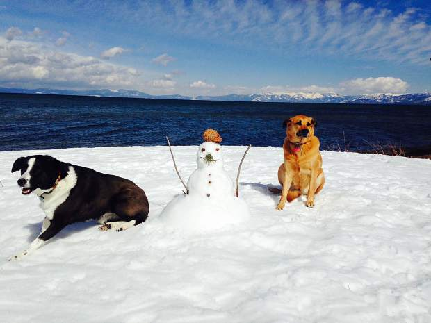 Railey and Scout enjoying sun and snow!