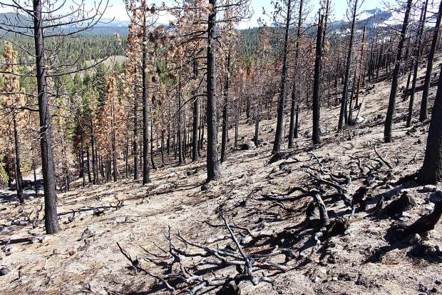 The Emerald Fire, which started on Oct. 16, 2016, burned 176 acres.
