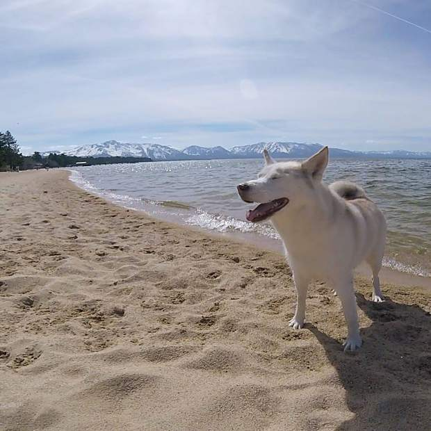 Kyra's so happy it's becoming beach weather.