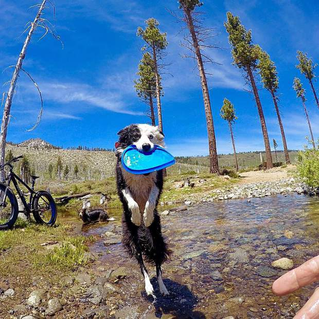 Poki stresses the importance of cross training by bringing her frisbee along on a mountain bike ride.