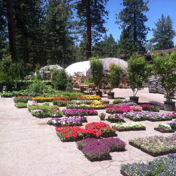 Lake Tahoe Homes: Which Native Plants Will Thrive Around Your Lake Tahoe