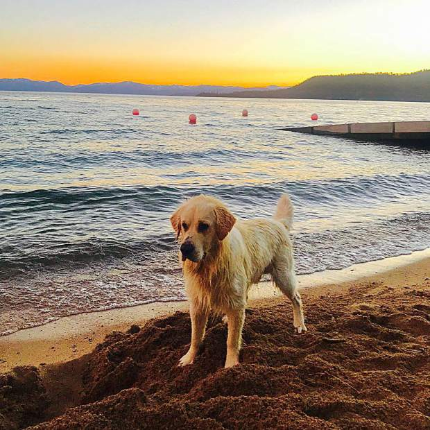 Friday sunset + Tahoe Incline Beach + @jettretriever = Perfection.