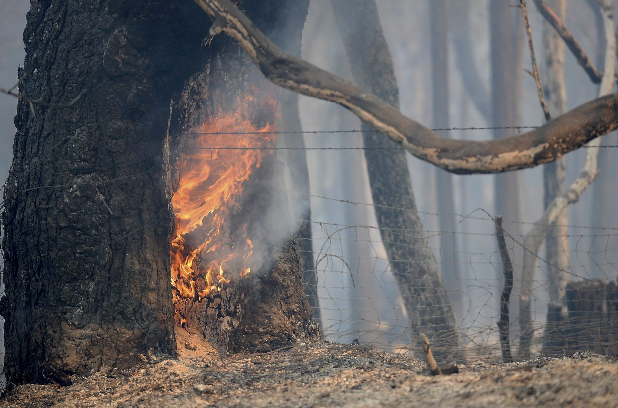 A tree continues to burn from a wildfire along Lumpkin Road near Oroville, Calif., Wednesday, Aug. 30, 2017. The wildfire is among a series of wildfires burning across the U.S. West.