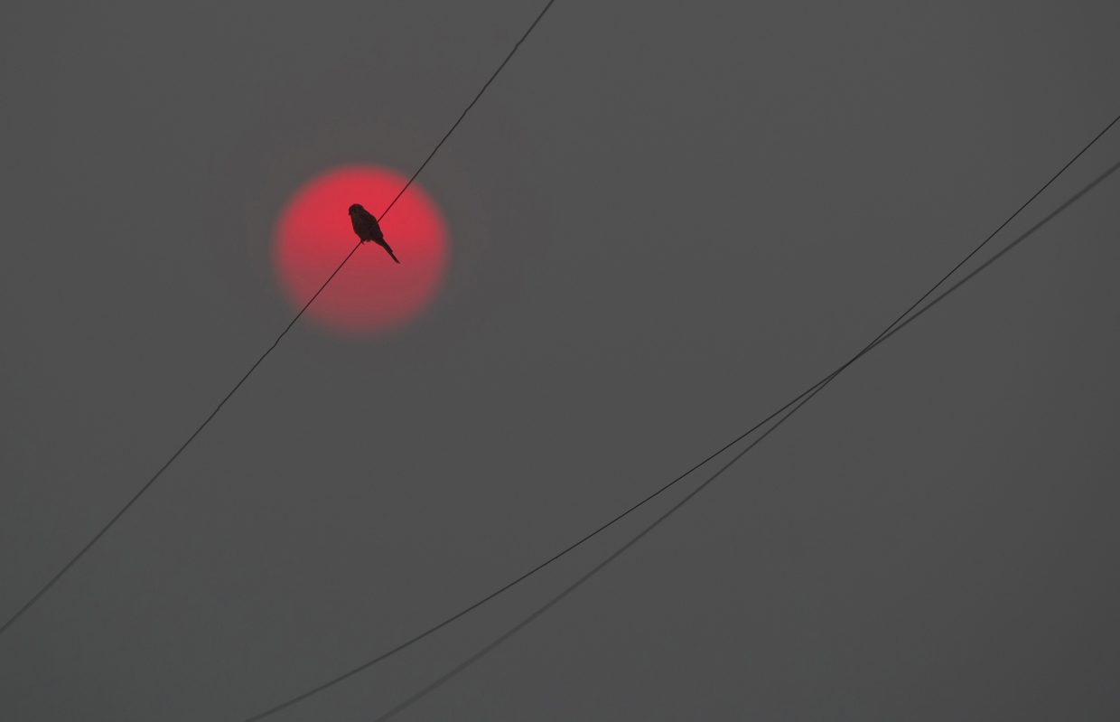 An American kestral takes in the setting sun, made red from Northwest wildfire smoke, from a power line just outside Walla Walla, Wash., Monday evening, Sept. 4, 2017. (Greg Lehman/Walla Walla Union-Bulletin via AP)
