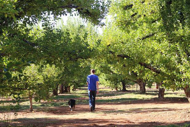 Apple Hill is home to over 50 farms, orchards and ranches.