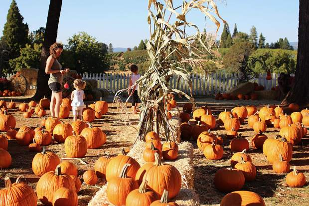 Other fall produce is available to purchase in Apple Hill, like pumpkins.