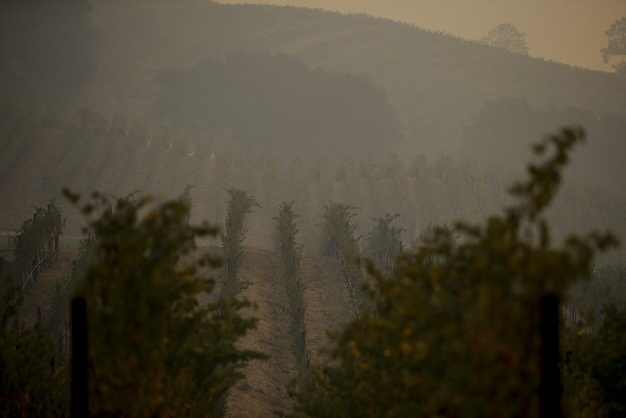 Smoke generated by wildfires fills the air in a vineyard Thursday, Oct. 12, 2017, near Napa, Calif. Gusting winds and dry air forecast for Thursday could drive the next wave of devastating wildfires that are already well on their way to becoming the deadliest and most destructive in California history.