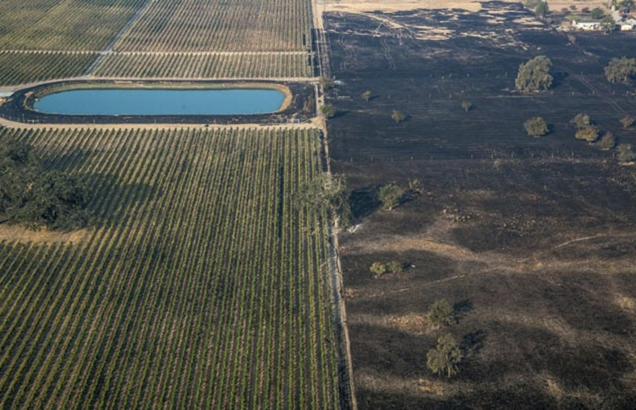 In this Wednesday, Oct. 11, 2017, aerial photo provided by George Rose shows a lush vineyard, left, next to a scorched wasteland near Vintners Inn, just north of Coffey Park, Sonoma County near Santa Rosa, Calif. Officials say progress is being made in some of the largest wildfires burning in Northern California but that the death toll is almost sure to surge.