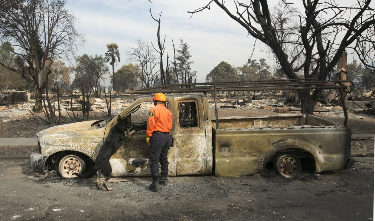 Shay Cook, of the Alameda County Sheriff's Office Search and Rescue team and her search dog, Zinka inspect a burned out pickup while searching the Coffey Park area Tuesday, Oct. 17, 2017, in Santa Rosa, Calif. A massive wildfire swept through the area last week destroying thousands of housing and business and taking the lives of more than two dozen people.