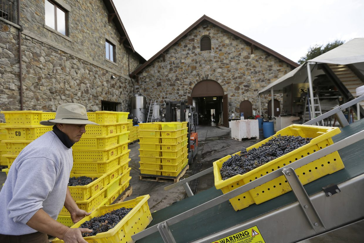Bins of Cabernet Sauvignon grapes are placed on a conveyor before being sorted and crushed during harvest at the Cardinale winery Thursday, Oct. 19, 2017, in Oakville, Calif. The winery reopened to the public Thursday after being closed during last week's wildfires. The wildfires that have devastated California this month caused at least $1 billion in damage to insured property, officials said Thursday, as authorities raised the number of homes and other buildings destroyed to nearly 7,000.