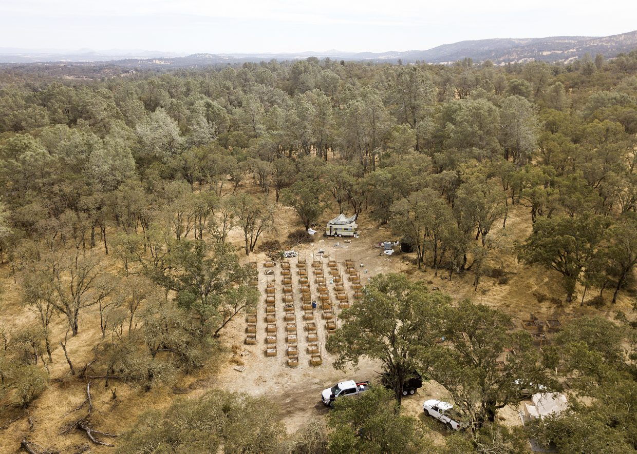 In this Sept. 29, 2017 photo, empty beds for marijuana plants line a clearing after sheriff's deputies raided a growing operation in unincorporated Calaveras County, Calif. Marijuana has deeply divided the financially strapped county and it is among many now grappling with a pot economy where growers have become increasingly open about their operations and have begun encroaching on residential neighborhoods.