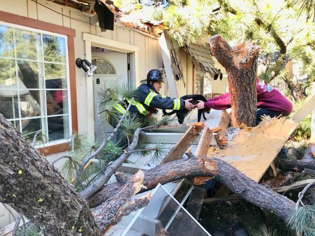 South Lake Tahoe Fire Rescue responded to the tree collapse and helped rescue a cat from the building.