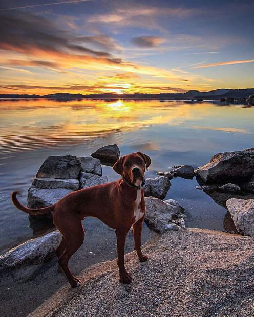 Ender dog likes watching beautiful Tahoe sunsets also!