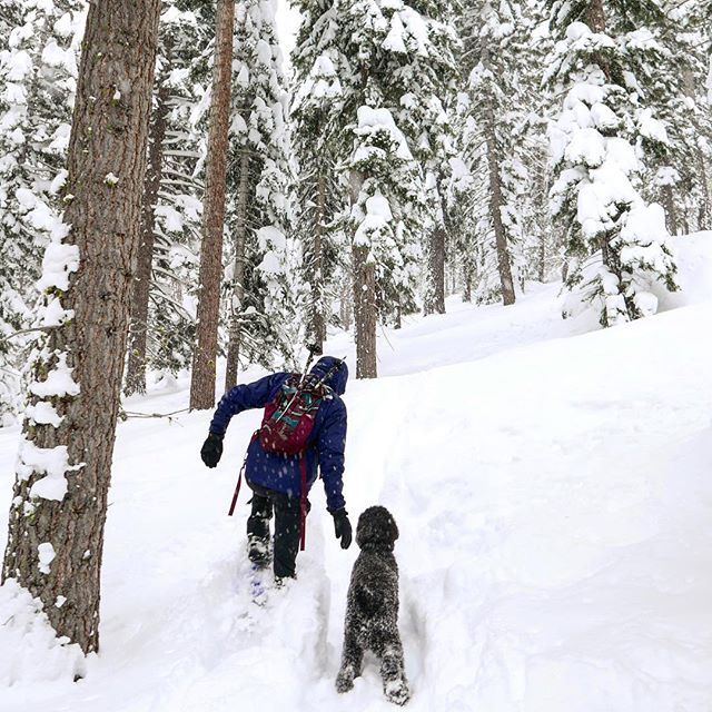 What better way to start the weekend than hikes in the snow with a four-legged friend?