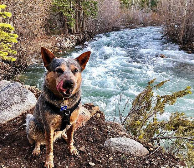 The spring rivers are a flowin'!