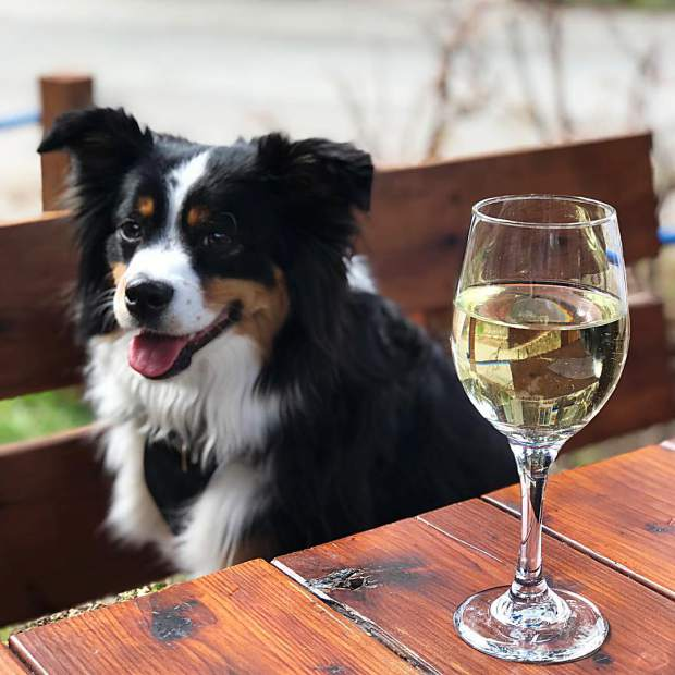 Happy Vacation! Dog-friendly patios are the best!