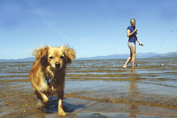 South Shore's Regan Beach offers an area for four-legged friends to get in the water with their owners.