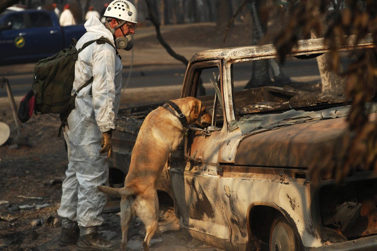 FILE - In this Friday, Nov. 16, 2018 file photo, a recovery dog searches for human remains in Paradise, Calif. Searchers are in a race against time with long-awaited rains expected in the Northern California fire zone where dozens bodies have been recovered so far. While the rain is good for tamping down the still-burning Camp fire, it will turn the fire zone into a muddy mess and make it more difficult for crews to search.