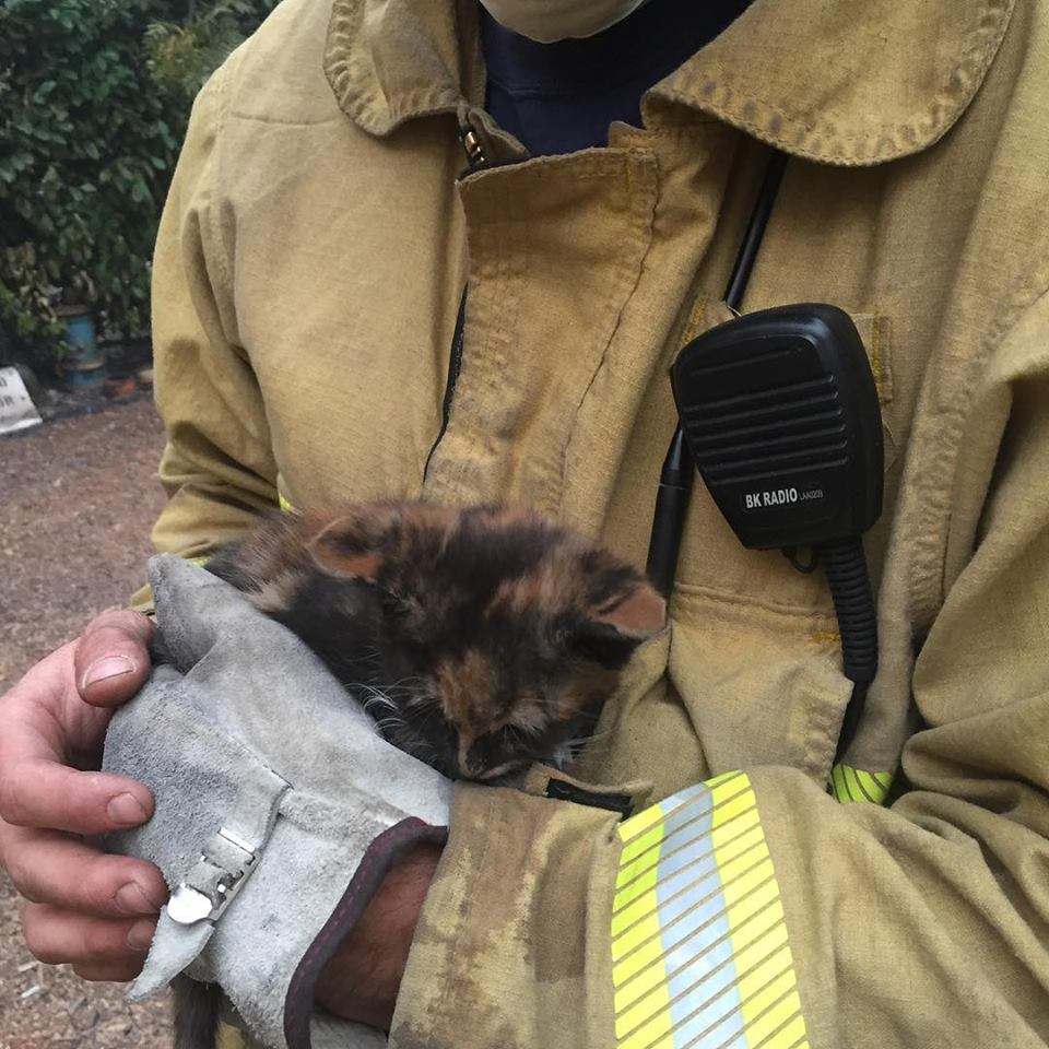 A North Lake Tahoe Fire Protection District firefighter carries a kitten found amid the destruction in Paradise, California.