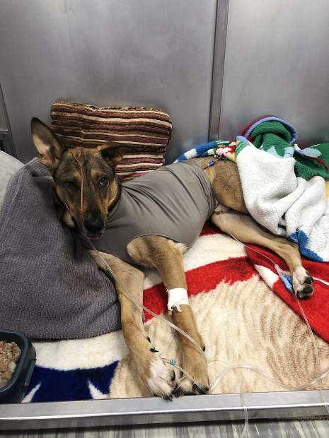 One dog succumbed to injuries while another continues to try and recover after both fell from the top of a five-story parking garage.