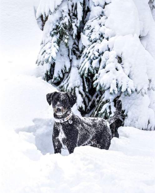 I want to be this deep in snow for eternity and beyond, all just feels right in the cold, fluffy, white stuff.