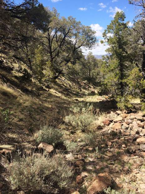 The canyon seemed to be an old road, by how clear it was and the rocks stacked along the sides. According to Wikipedia, the area was used as a watering place and a camp site on the Old Spanish Trail and then later on the Mormon Road.